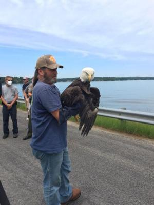 Bryson Wortham established Holly's Nest Animal Rescue in honor of his daughter, who died in 2004. The Sanford nonprofit is the state's largest fawn rescue operation. Wortham is a certified wildlife rehabilitator and said this was his first bald eagle rescue